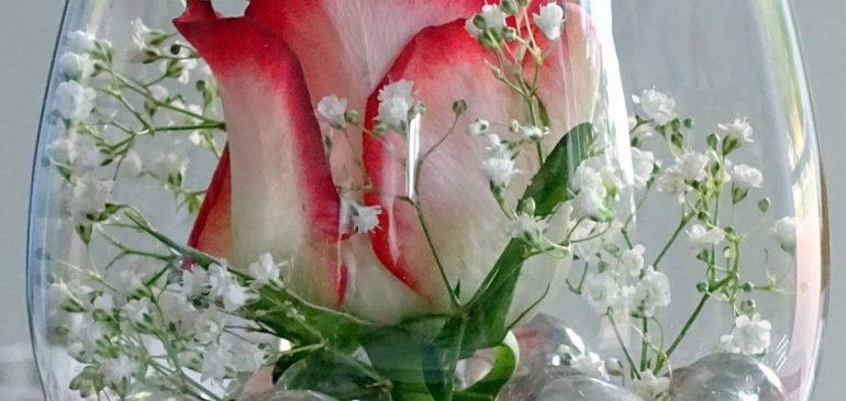 Conserver une rose éternelle : comment y arriver?